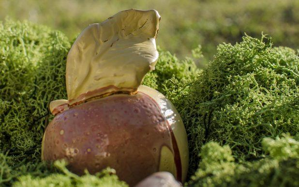 Copri tappo Mela Conventina in ceramica