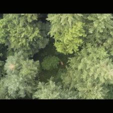 IL PROGETTO TRACE  Il canto degli alberi per salvare il Pianeta