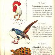 tavola del Codex Seraphinianus raffigurante strani uccelli