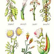 Botanica in un'illustrazione del Codex Seraphinianus